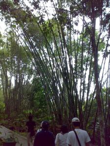 Kinabalu trip - Mount Kinabalu Park