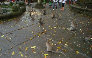 Bali Trip - Ubud Monkey Forest - The Monkey
