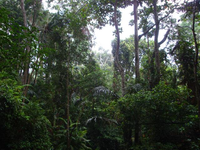 Bali Trip - Ubud Monkey Forest