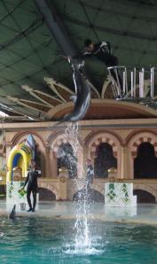 Ancol trip - Dolphin & Sea Lion show (1)