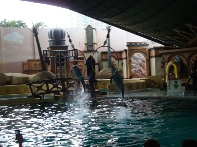 Ancol trip - Dolphin & Sea Lion show (2)