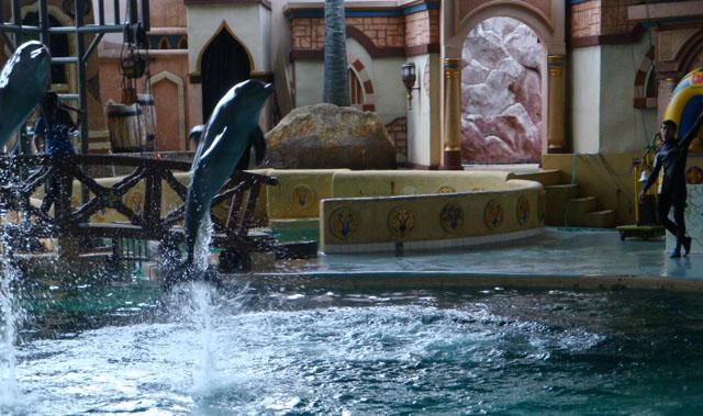 Ancol trip - Dolphin & Sea Lion show (3)