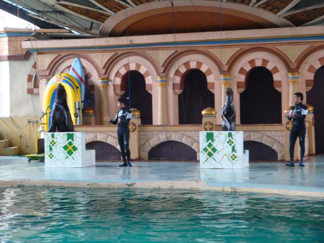 Ancol trip - Dolphin & Sea Lion show