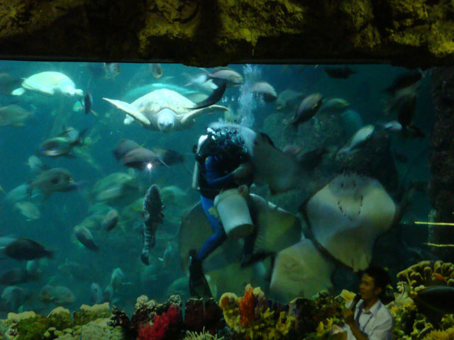 Ancol trip - Sea World - Feeding time