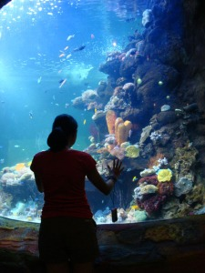 Ancol trip - Sea World - Sinthya's starring at the aquarium