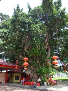 Semarang Trip - Sam Poo Kong Temple - The Banyan Tree with the lanterns