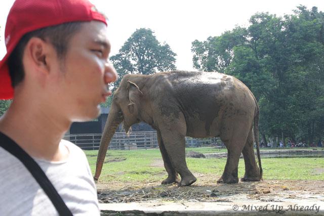 Ragunan zoo - Me kissing the elephant