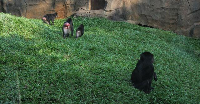 Ragunan zoo - Schmutzer - Boti