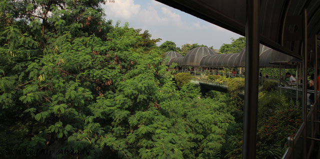 Ragunan zoo - Schmutzer - The Bridge