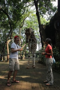 Ragunan zoo - With the Giraffe (Jerapah)