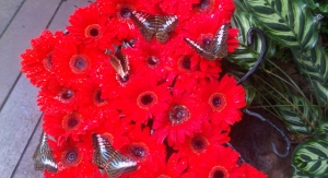 Singapore memory - Changi Airport Singapore - Butterfly Garden