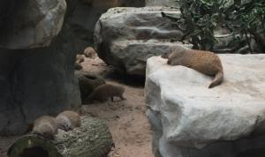 Singapore memory - Singapore zoo