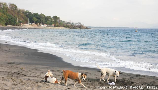 Lombok trip - Senggigi beach - Lombok dogs