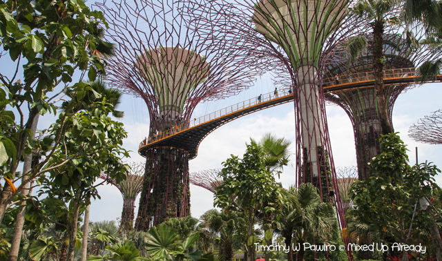 Gardens by the Bay - The supertree grove