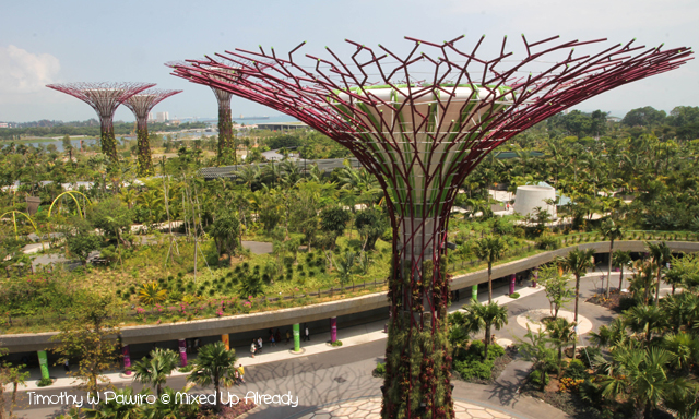 Gardens by the Bay - The supertree grove - A view from above