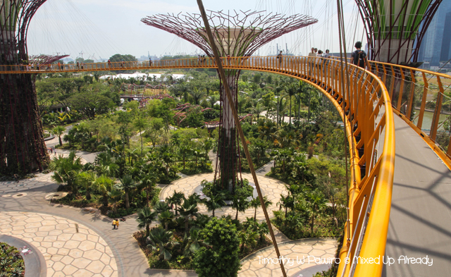 Gardens by the Bay - The supertree grove - The skywalk