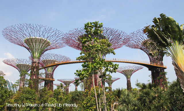 Gardens by the Bay - The supertree grove with the real trees