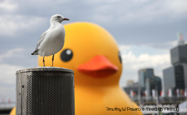 Australia trip - Sydney - Darling Harbour - The Seagull vs The Rubber Duck