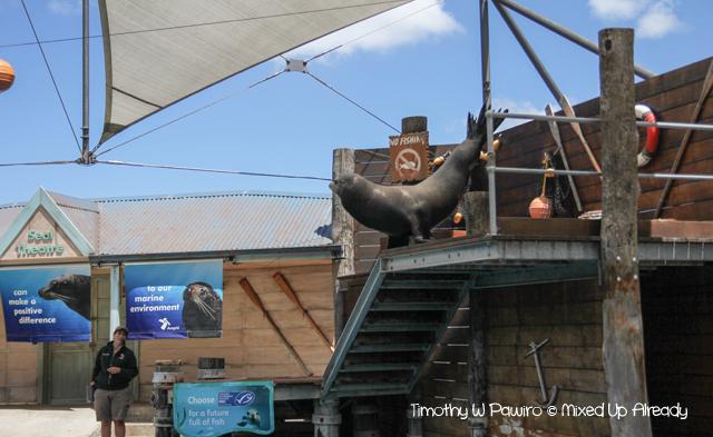 Australia trip - Sydney - Taronga Zoo - Sea Lion show