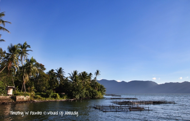 Indonesia - Sumatra - Bukittinggi - Lake Maninjau - View from Waterfront cafe - Karamba (fish farming)
