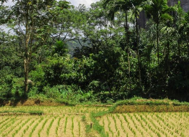 Indonesia - West Sumatra - Lembah Harau - Cover page
